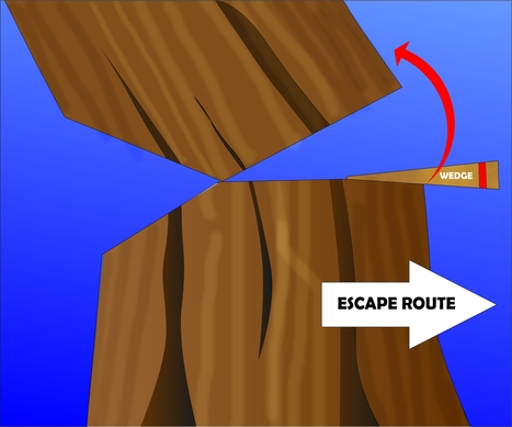 How to Fell a Tree | Tree Cutting Tips in Atlanta GA | Scoop.it