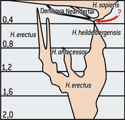 L'humanité issue d'un goulot d'étranglement génétique | Aux origines | Scoop.it