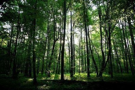 Plongée luxuriante dans la dernière forêt vierge d'Europe | The Blog's Revue by OlivierSC | Scoop.it