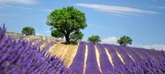 Chimie du végétal : le potentiel de la biomasse en France | Topic | Scoop.it
