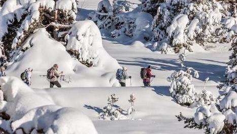 VIDEO. Le ski de randonnée compte de plus en plus d'adeptes - Francetv info   Vanoise ski & randonnée   Scoop.it
