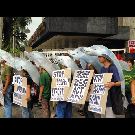 ACTIVISTS CONDEMN RESORTS WORLD SENTOSA, DA & BFAR FOR DOLPHIN DEATH | Earth Island Institute - Philippines | Earth Island Institute Philippines | Scoop.it
