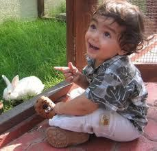 The Role of Animal's in Your Little Ones Life | British Preschool and Day Care Kensington Nursery in Dubai | Scoop.it