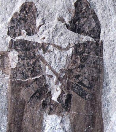 Deux insectes morts et fossilisés en plein accouplement | Nouvelles arthropodes | Scoop.it