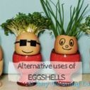 Surprising Uses of Eggshells | House cleaning | Scoop.it