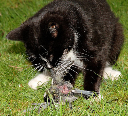 Killer cats? Not so fast, animal welfare groups say   Pet News   Scoop.it