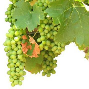 « Inutile de se préoccuper des résidus de pesticides dans les fruits et légumes » (USA) - ForumPhyto | Sustain Our Earth | Scoop.it