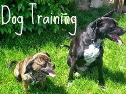 DOG TRAINING BY PROFESSIONAL DOG TRAINER:- WESLEY LAIRD: Pooch Training in House Breaking in 3 Simple Steps! Save Your Carpets From Stinky Urine Spots! | Dog  Training Melbourne | Scoop.it