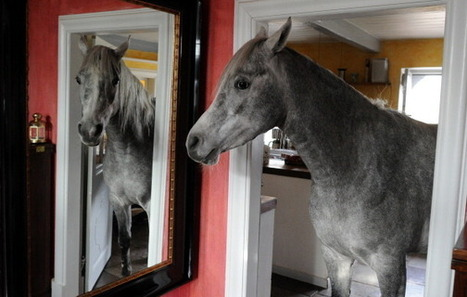 Woman, Arabian horse live together in farmhouse - Atlanta Journal Constitution   Dressage   Scoop.it