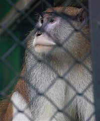 Idaho Man Suspected of Monkey Killing to Be Moved To Ada County ... | Rhino poaching | Scoop.it
