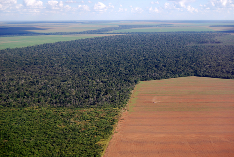 Deforestation: Facts, Causes & Effects | Research | Scoop.it