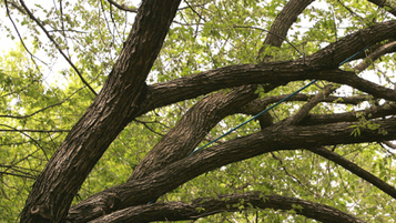 Energy Saving Trees Program Helps Texas Homeowners   Energy Saving Trees   Scoop.it