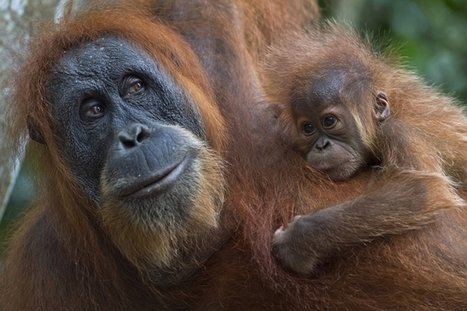 """The Last Orangutan Eden"" ~ Full Episode 