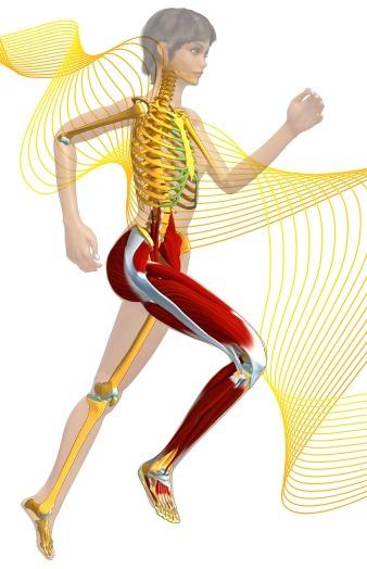 Anatomie 3D : 99 vidéos 3D et des applis Unity en accès libre | Education & Numérique | Scoop.it