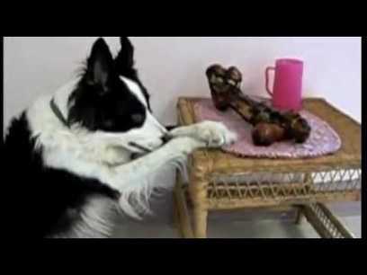The Best of Dogs Saying Grace Before They Eat | Videos that make you laugh and cry | Scoop.it