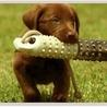 dog trainers