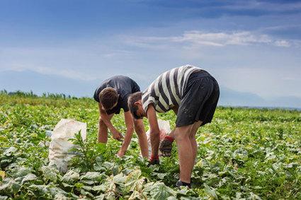 El subsidio agrario en Andalucía y Extremadura | Emplé@te 2.0 | Scoop.it