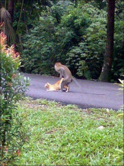 Monkey Fuck or Cat Fail ?   Fail   Scoop.it