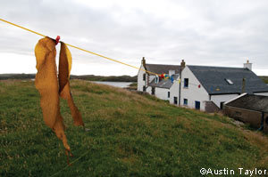Greens of the sea - FT.com | @FoodMeditations Time | Scoop.it
