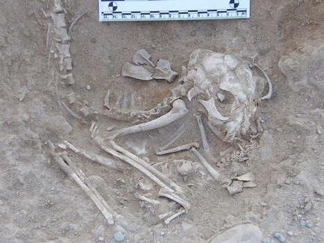 EGYPTE : Ancient Egyptian Kittens Hint at Cat Domestication | World Neolithic | Scoop.it