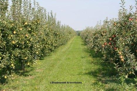 Quels sont les effets de l'agriculture sur la biodiversité ? Revue d'experts (volet 1)   Environnement et developpement durable   Scoop.it