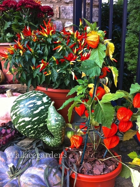 Pumpkins on Porches! by Wallace Gardens | Grown Green Gardens | Scoop.it