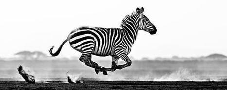 David Yarrow on Twitter | Nature Animals humankind | Scoop.it