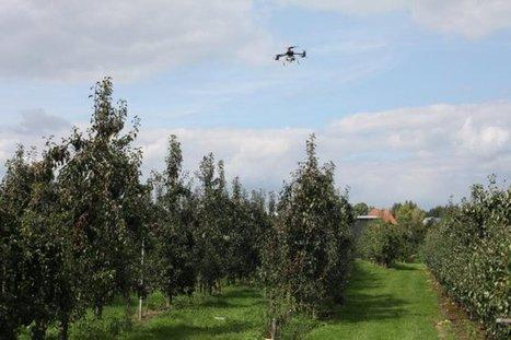 UAS to Detect Fruit Tree Diseases in Flanders | UAS VISION | Forest health | Scoop.it
