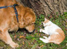 10 Differences Between Cats and Dogs | Gentle Dog Training and Care | Scoop.it