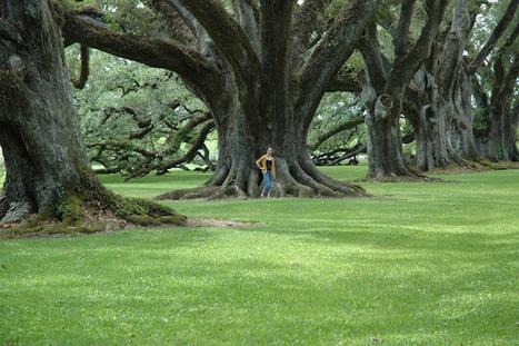 My World in Pennsylvania: Oak Alley Plantation | Oak Alley Plantation: Things to see! | Scoop.it