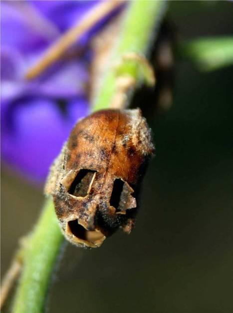 Snapdragon Skull
