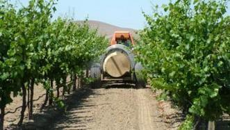 Weeds and your smart phone offer clues to what's underfoot in your vineyard | Grapes content from Western Farm Press | Southern California Wine and Craft Spirits Journal | Scoop.it