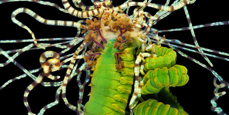 This Might Be The Trippiest Life Form On The Planet | Non Humans (Animals) | Scoop.it