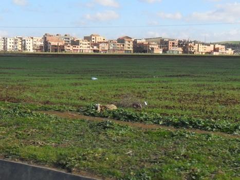 Egypte: Le droit d'intérêt permet l'héritage des terres à travers des garanties | Égypt-actus | Scoop.it