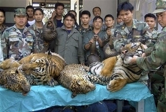 Top 10 Lucrative Crimes | Wildlife Trafficking: Who Does it? Allows it? | Scoop.it
