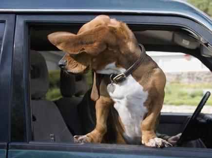 Viaggi in auto col 4 zampe?   Chic4Dog   Chic4Dog Care   Scoop.it