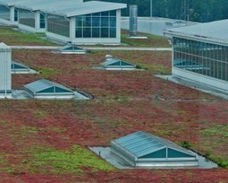 Green Roof Goodness | Defenders of Wildlife Blog | Eco-friendly roofs:  green, white, and garden | Scoop.it