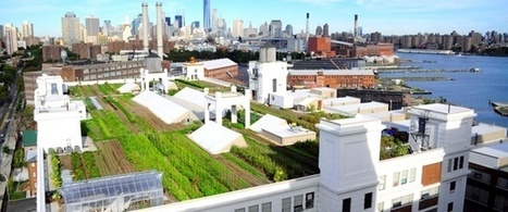 6 Urban Farms Revolutionizing Where Food Is Grown | Community Food Systems | Scoop.it