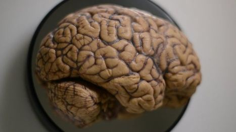 Why brains are beautiful - BBC News | Neuroscience: Research News | Scoop.it