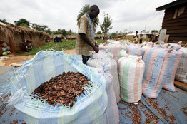 Cocoa Futures Rally on Surprisingly Sweet Demand - Wall Street Journal   @FoodMeditations Time   Scoop.it