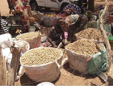 Un futur plus vert pour le Sahel | Afrique: développement durable et environnement | Scoop.it
