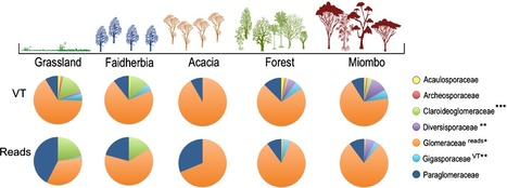 Arbuscular mycorrhizal fungi communities from tropical Africa reveal strong ecological structure | Plant roots and rhizosphere | Scoop.it
