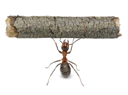 Impressive Facts About Ants | All About Ants | Scoop.it
