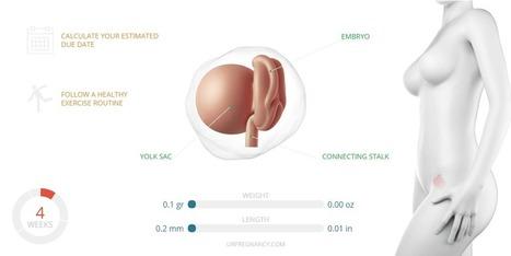 4 Weeks Pregnant | Your Pregnancy | Scoop.it
