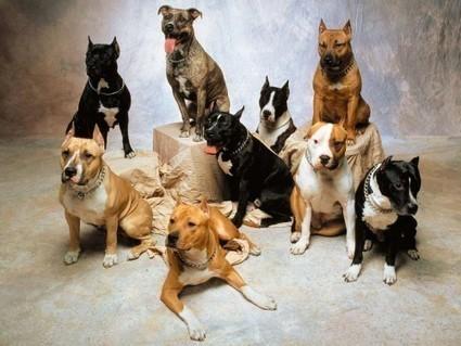 Best Dog Breeds Wallpaper / Wallpaper Animal high quality Backgrounds for mobile, iphone, desktop|wallpaper repository - vicvapor.com | Dog Lovers | Scoop.it