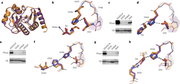 Design of activated serine–containing catalytic triads with atomic-level accuracy : Nature Chemical Biology : Nature Publishing Group | Computational approaches for protein engineering and design | Scoop.it