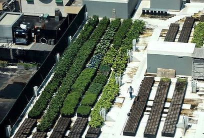 Rooftop Farming | Mygreenbooking , Partners in Sustainability ! | Scoop.it