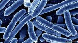Superbugs to kill 'more than cancer' by 2050 - BBC News | non toxic choices | Scoop.it