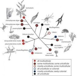 From one cell to many: How did multicellularity evolve?   Virology News   Scoop.it