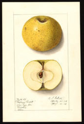 As American as apples   Agricultural Biodiversity   Scoop.it